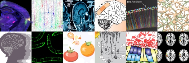 Knowing Neurons collage
