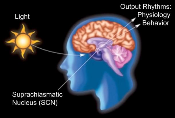 circadian2_750