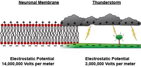 Membrane Figure