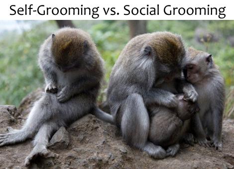 SocialGrooming_470