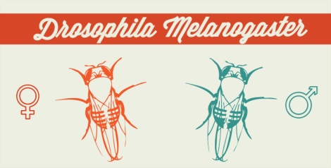Drosophila_Featured