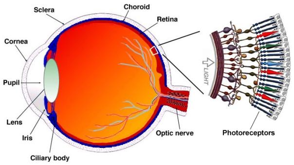EyeRetina