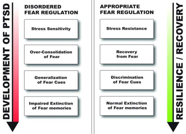 Suppressing abnormal fear responses to control PTSD.