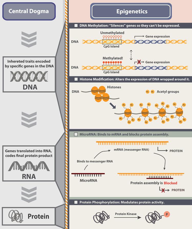 Epigenetics_Infographic