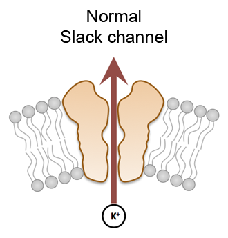 Slack Channel Knowing Neurons Pain