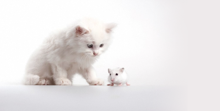 Cat and Mouse by Knowing Neurons