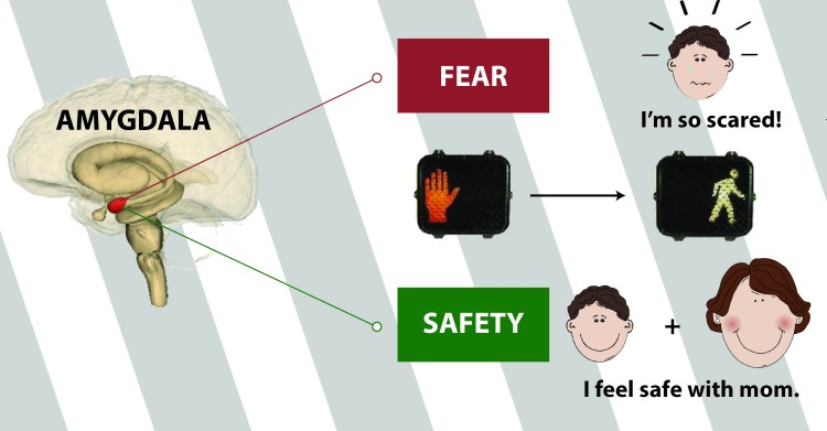 The Sum of All Fears Knowing Neurons