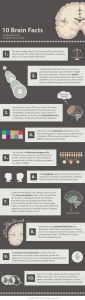 10 Brain Facts by Knowing Neurons Infographic