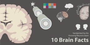 10 Brain Facts