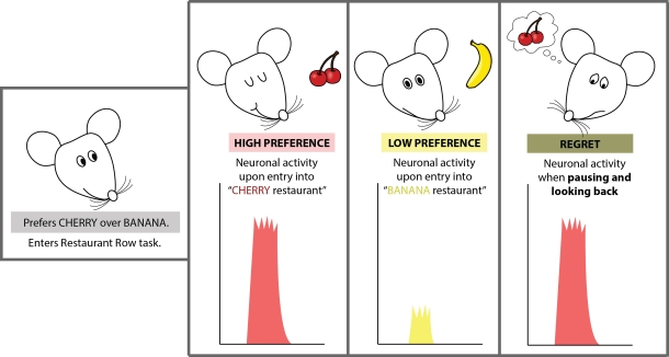Neuronal Activity of Regret Knowing Neurons