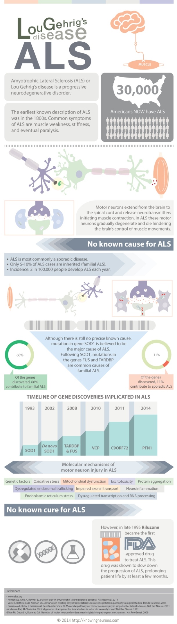 ALS Infographic by Knowing Neurons