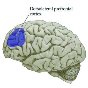 DorsolateralPrefrontalCortex