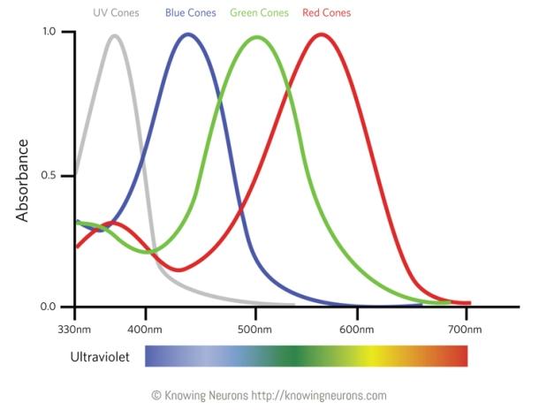 Pigment Sensitivity Knowing Neurons