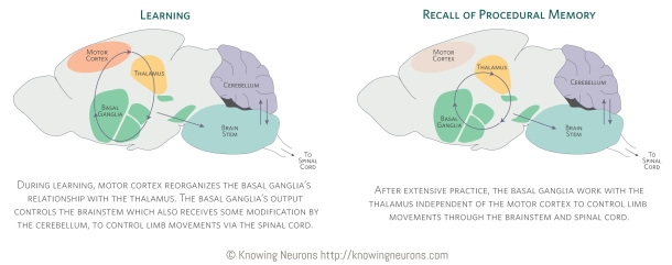 Complex_Knowing-Neurons