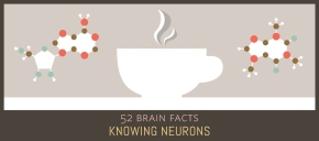 Myth or Fact? The mechanism by which caffeine keeps humans awake is a mystery.