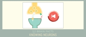 Myth of fact? Some neurotransmitters travel backwards across the synapse.