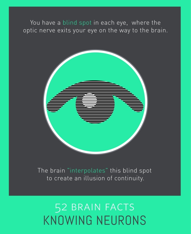 Myth or Fact? Blind spots do not occur in the healthy eye.