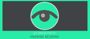 Myth or Fact? Blind spots do not occur in healthyeyes.