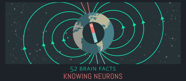 23_Magnetic-field_Cover_Knowing-Neurons