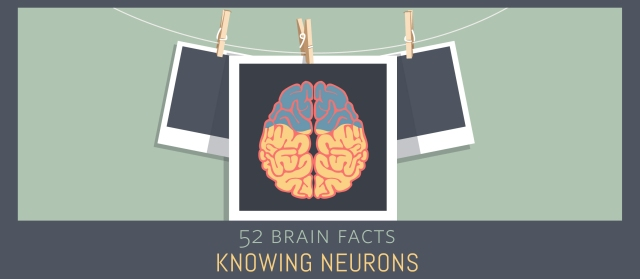 24_60%_Cover_Knowing-Neurons
